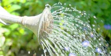 watering_featured